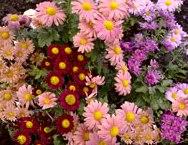 фото дубки цветы